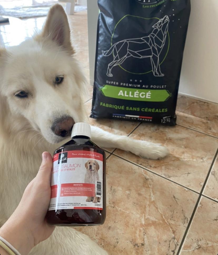 chien avec huile saumon
